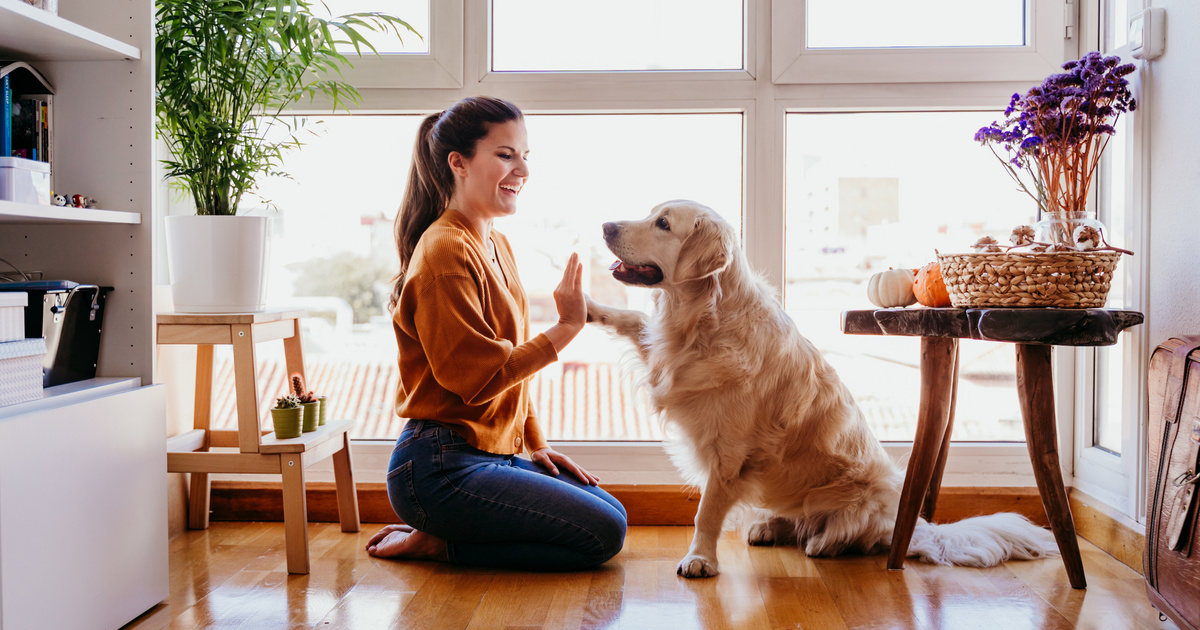 Mérd fel a kutyád képességeit a négyszavas teszttel: okos, vagy egyenesen géniusz?