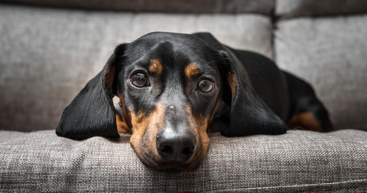 """""""A felelős gazdi jól etet, ivartalanít, képzi a kutyáját"""" - Interjú Varga Adrienn-nel, a Kutyaovi Állatvédő Egyesületből"""