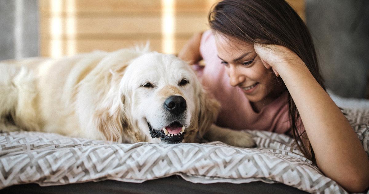10 kérdés a kutyákról: tudod, mit jelent, ha az eb behúzza a farkát?