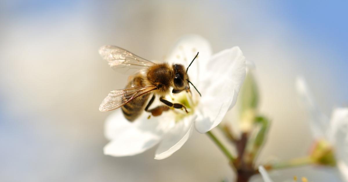 Rájöttek a kutatók, milyen méhek adnak jobb minőségű mézet: meglepő eredmény született