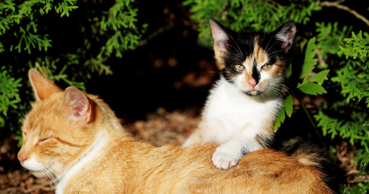 A macskák érzelemingazodása olyan, mint egy szinuszgörbe
