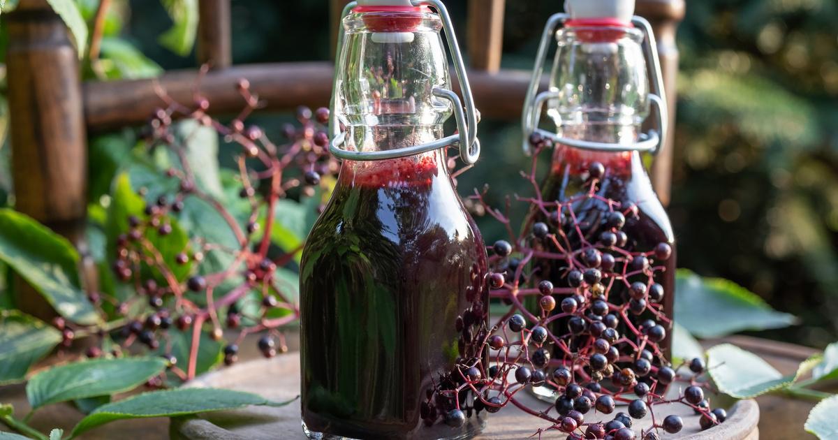 Zamatos bodzabogyószörp tartósítószer nélkül: régi recept a nagyi konyhájából