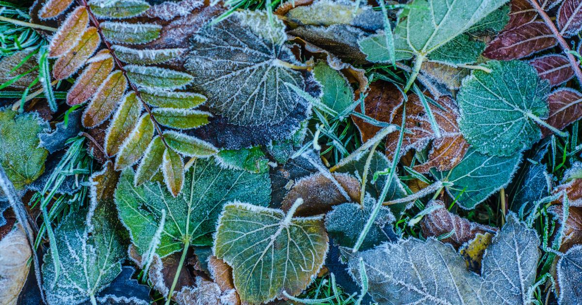 Megérkezett az első fagy: először mértek mínuszt az idei ősz során