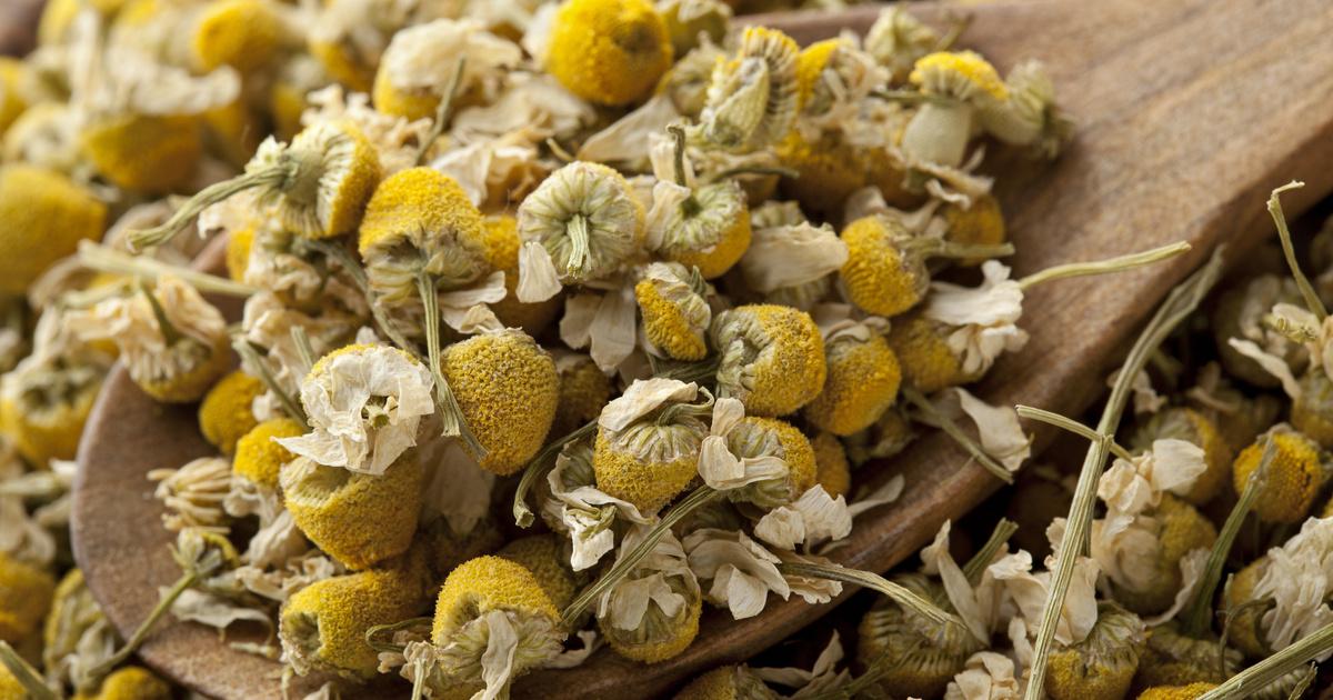 Gátolják a szürke hályog kialakulását, csökkentik a gyulladást: 4 gyógynövény a bükki füvesember ajánlásával