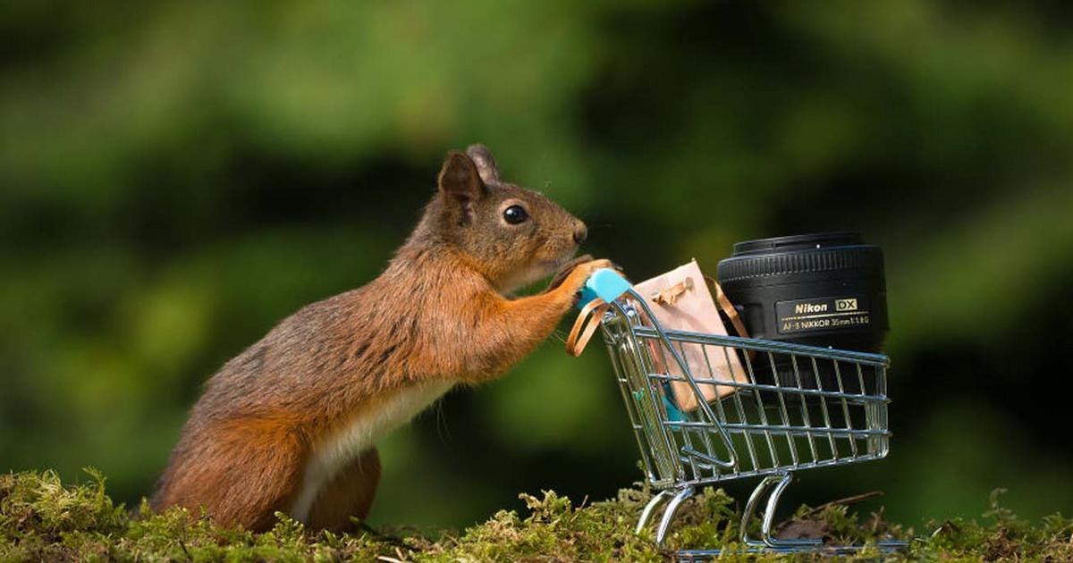 A kertjébe betévedt mókusokat figyelte a fotós: nagyon aranyos képek születtek
