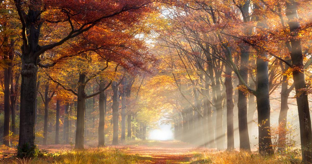 Kellemes őszi napok várnak ránk a héten: akár 18 fok is lehet