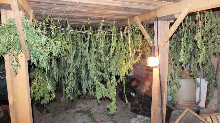 valko cannabis 5