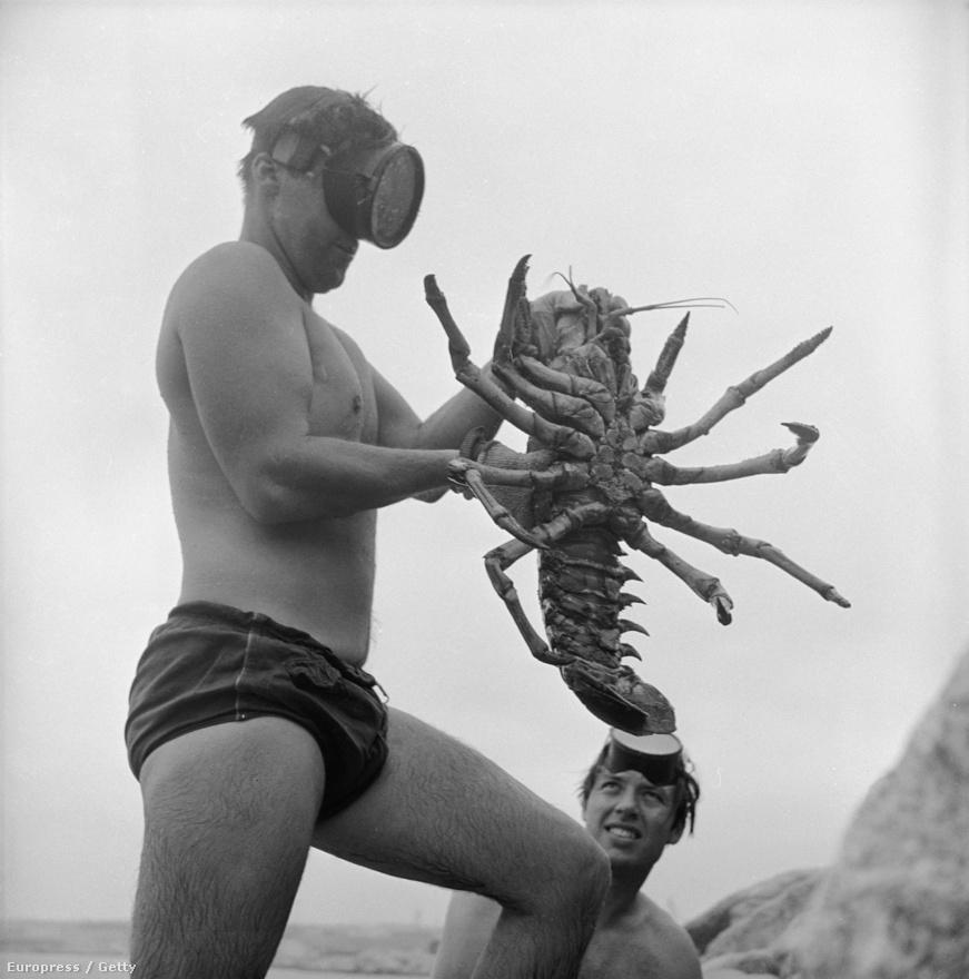 Ismeretlen búvárszemüveges férfit nagyra nőtt ismeretlen homárt hoz elő a tengerből.