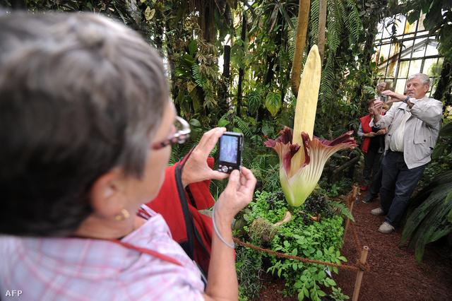 Növények pénisz formájában 13 vágyfokozó növény - afrodiziákumot a zöldségestől - Dívány