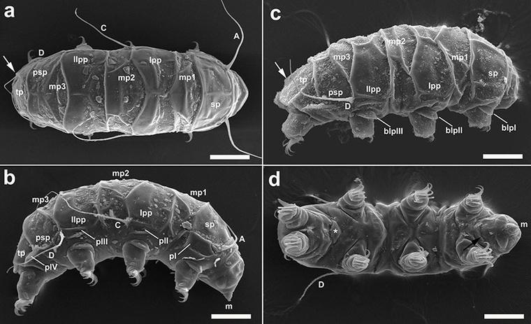 tardigrade-c2 (1)