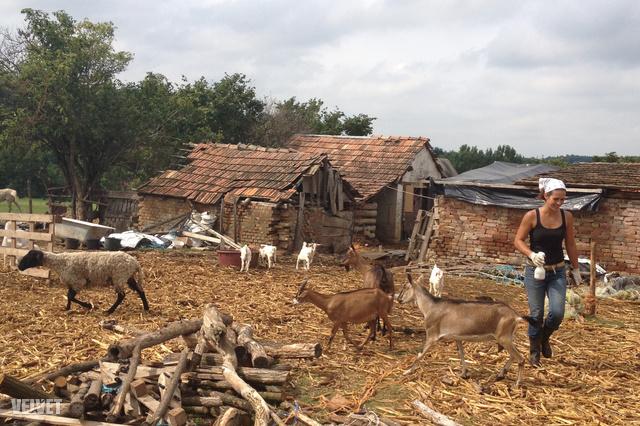 A farm és tulajdonosa – nem is értjük, mikor pihen