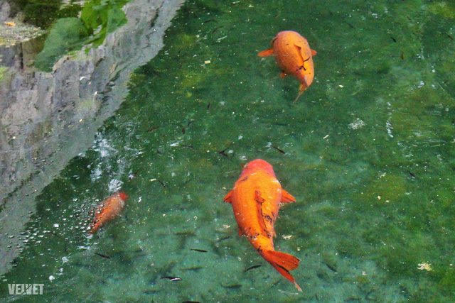 Büszke meleg hal randi