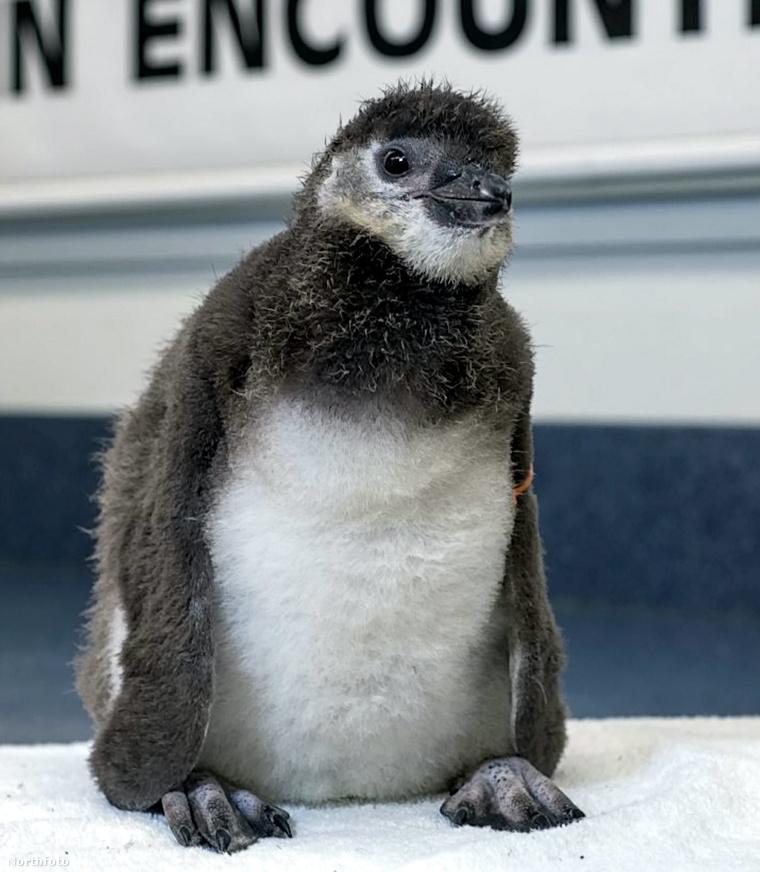 tk3s swns testtube penguin 01