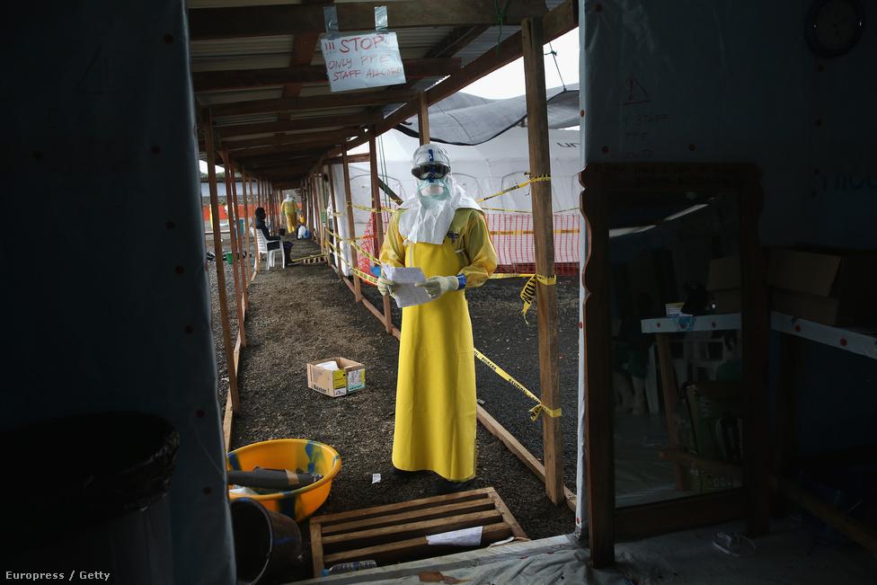 Egészségügyi dolgozó az orvosok Határok Nélkül gondozójában. Az eddigi ebolajárványok viszonylag hamar befejeződtek, a mostani viszont hónapok óta tombol, és semmi jelét nem mutatja annak, hogy csillapodna. A fő ok a modernizáció: míg az eddigi járványok helyszíne egy-egy elszigetelt, vagy mesterségesen elszigetelhető falu volt, mostanra a távolságok lerövidültek, és a vírus már azelőtt mozgásban volt, hogy az orvosok egyáltalán rájöttek volna, mivel állnak szemben. Afrikának ezen a részén ráadásul soha nem volt ebolajárvány, így az ápolók és az orvosok elsőre fel sem ismerték, és nem hozták meg időben a szükséges óvintézkedéseket.