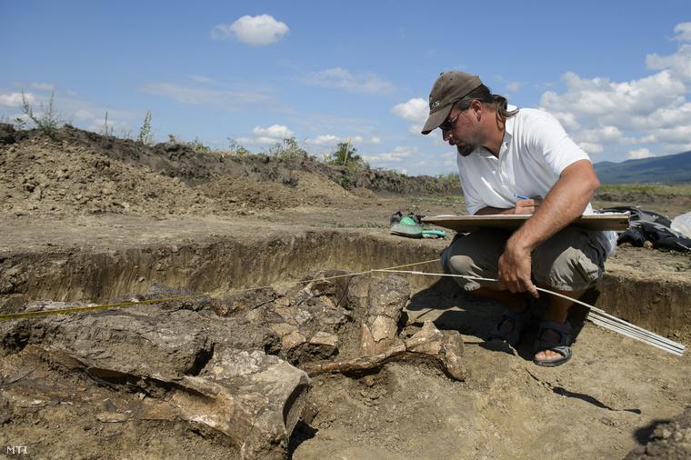 Szilágyi Márton ásatásvezető régész, az ELTE Régészettudományi Intézetének munkatársa a mamutmaradványt tanulmányozza