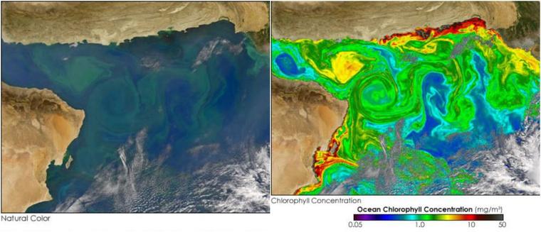 arabian-sea-collage-nasa