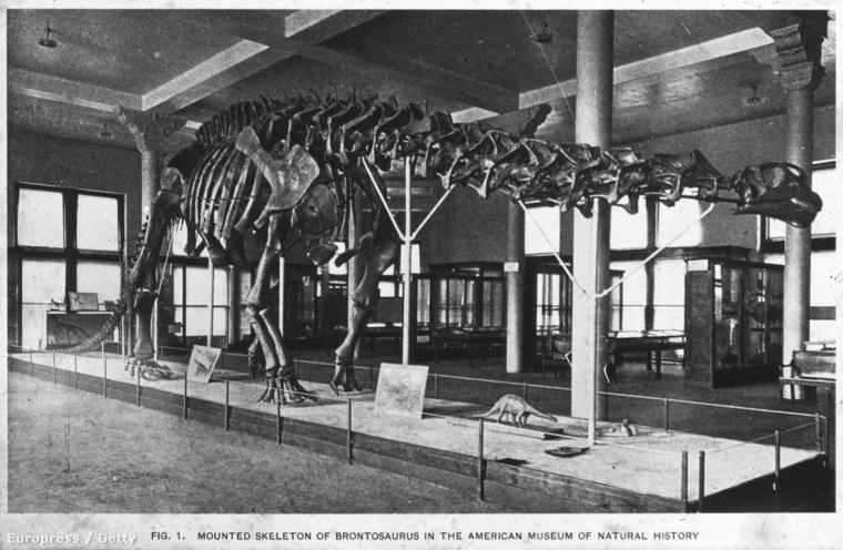 Az Apatosaurus csontváza