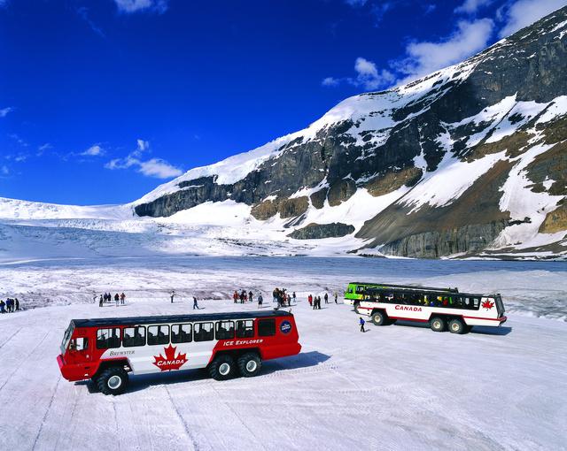 Gleccserek igáslova a Terra Bus
