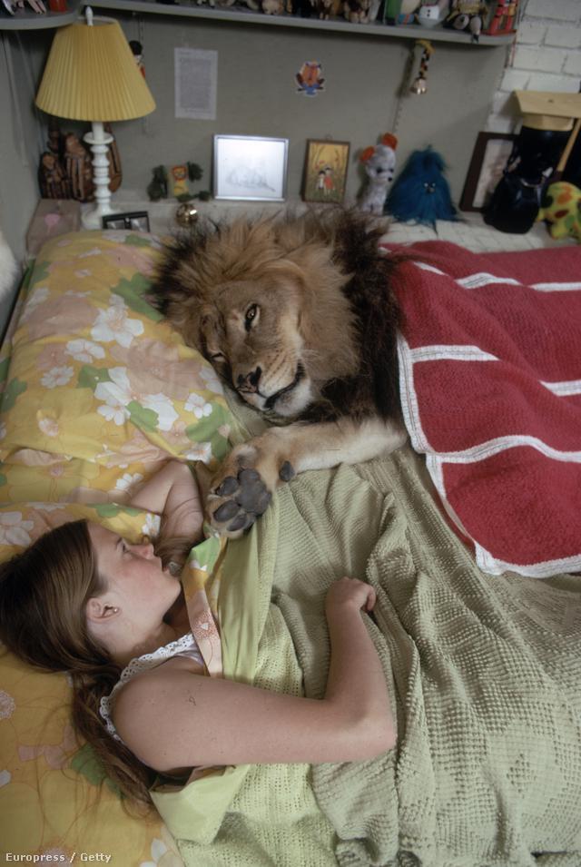 Ezen a képen például a fiatal Melanie Griffith alszik együtt Neillel. A szomszédok egy idő után kezdték rossz szemmel nézni, hogy napi váltásban érkeznek oroszlánok Marshallékhoz, ezért panaszt tettek a rendőrségen. Marshalléknak költözniük kellett, áttették a székhelyüket a Soledad Canyonba, ahol nem zavarta őket senki, és ők sem zavartak senkit az őrült ötletükkel.