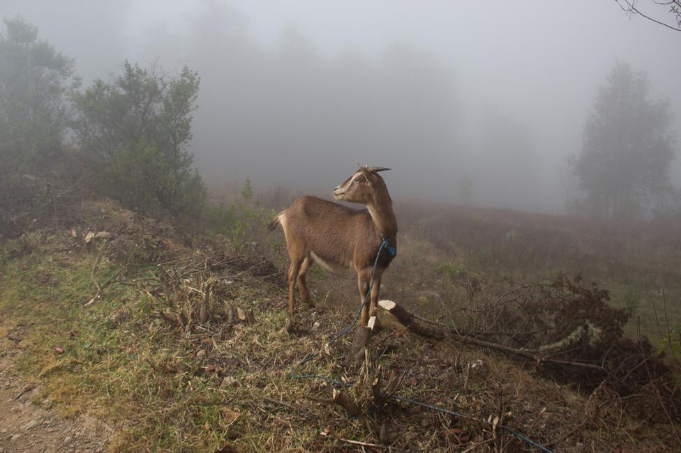 A ködben élő család önellátásra rendezkedett be, állatokat –  kecskét és csirkét – is tartanak.