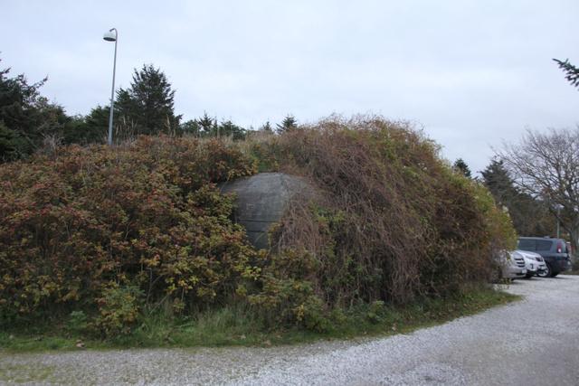 Nem bokor az, hanem egy bunker