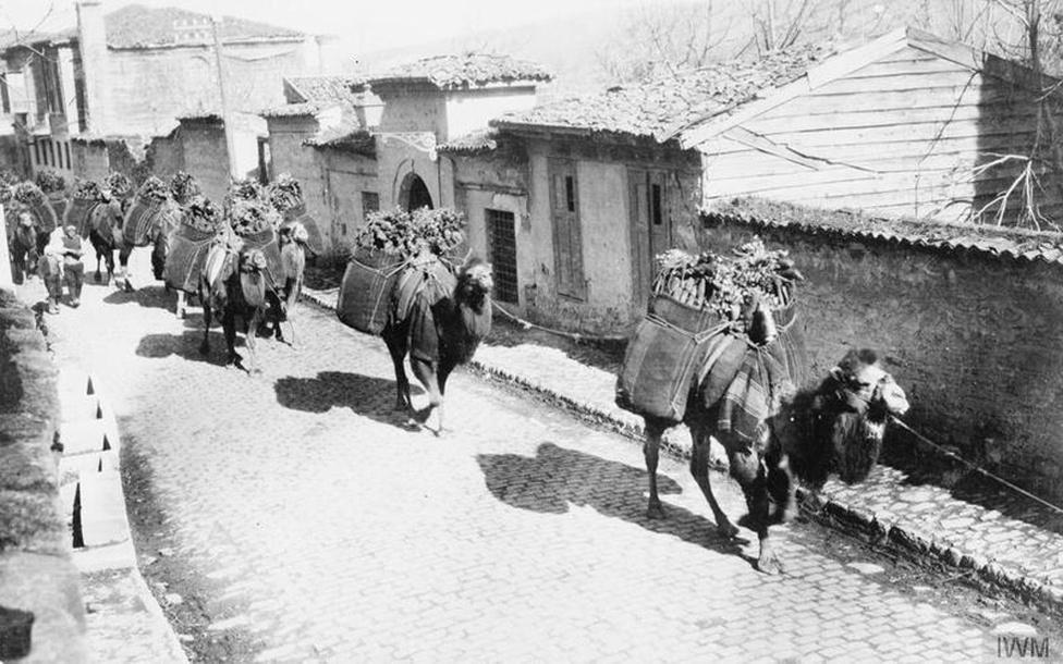 Tevék szállítják az utánpótlást a makedóniai fronton. A makedón fronton a bolgárok mellett az osztrák-magyar seregek harcoltak a szerbek és tulajdonképpen a teljes Antant ellen. A front különlegessége volt még az is, hogy a hadműveletek kidolgozásáért felelős német és osztrák-magyar vezérkari főnök annyira összevitatkozott, hogy egy idő után nem voltak hajlandók tárgyalni egymással. Ezt a bénultságot használta ki az antant, amikor a korábban megmentett 125 ezer szerb katonát újra harcba dobva stabilizálta az erőviszonyokat, végül a románok második hadba lépése mattolta a bolgár seregeket.