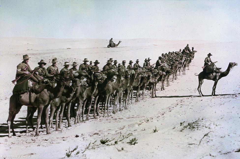 Az ausztrál Birodalmi Tevés Erők katonái sorakoznak Rafa közelében, az Oszmán Birodalom ellen folytatott csatában, 1918. január 26-án a közel-keleti fronton, Egyiptomban. A különleges egységet 1916-ban alapították, főleg a Gallipoliból visszatérő csapatokból verbuválva a legénységet. A tevés egységek egészen 1918-ig szolgáltak, ám hasznosságuk sokat csökkent, ahogy kiértek a homoksivatagos területekről, ráadásul egy teve sokkal több élelmet, vizet és gondozást igényelt, mint egy ló.