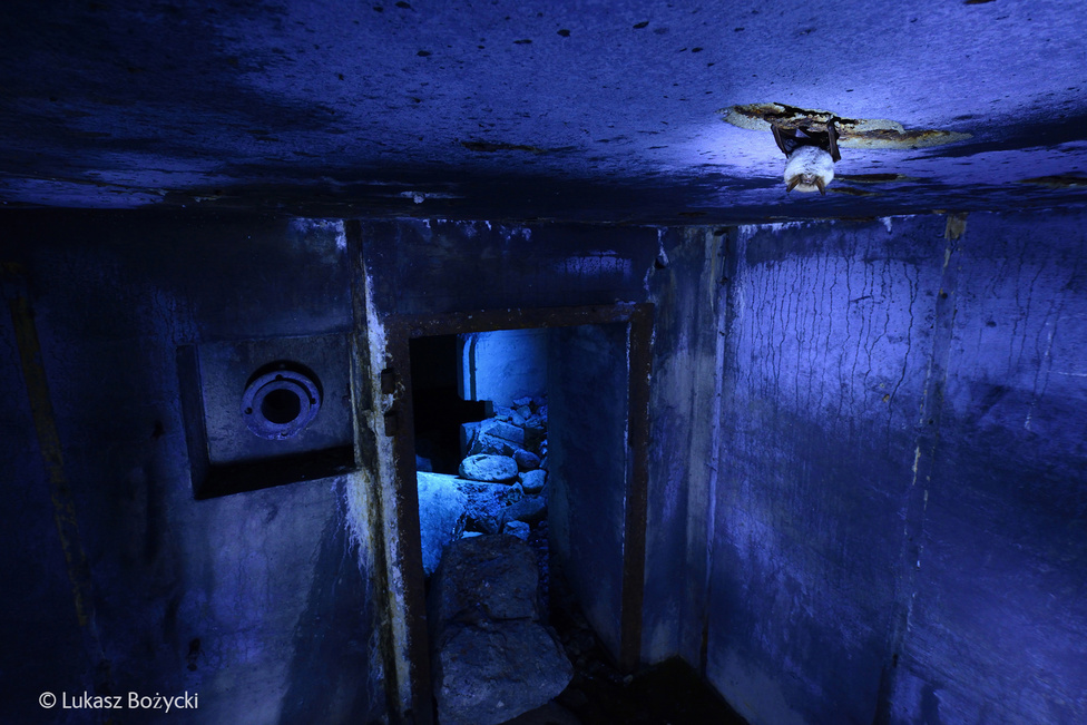 A bunkert a németek építették Lengyelországban, még a a második világháború alatt, de mára csak a romjai maradtak. Łukasz Bożycki egy egész hétre beköltözött a bunkerbe, hogy jó fotókat készítsen az itt telelő denevérekről.