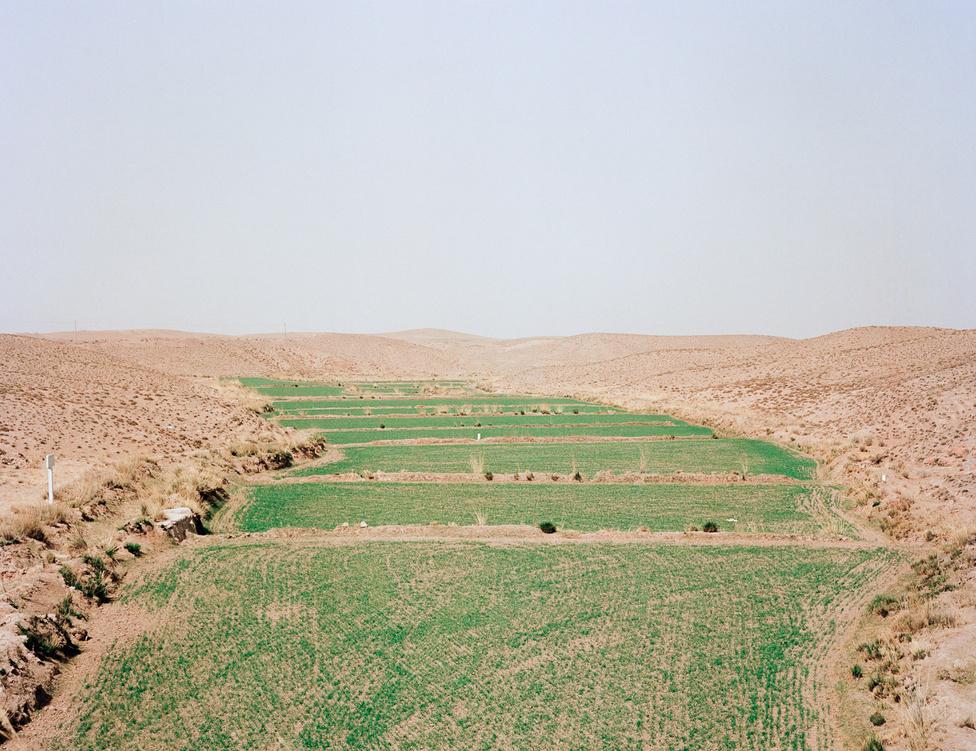 Gansu tartomány terméketlen talaján is folyik mezőgazdasági tevékenység. Főként gyapotot, kukoricát és dinnyét, édesburgonyát, babot termesztenek, mérsékelt sikerrel. A terület 30 milliós lakosságát nem lenne képes eltartani.
