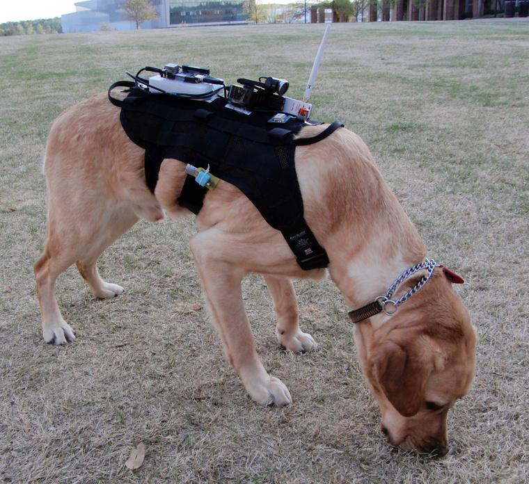 Dogbot-Header