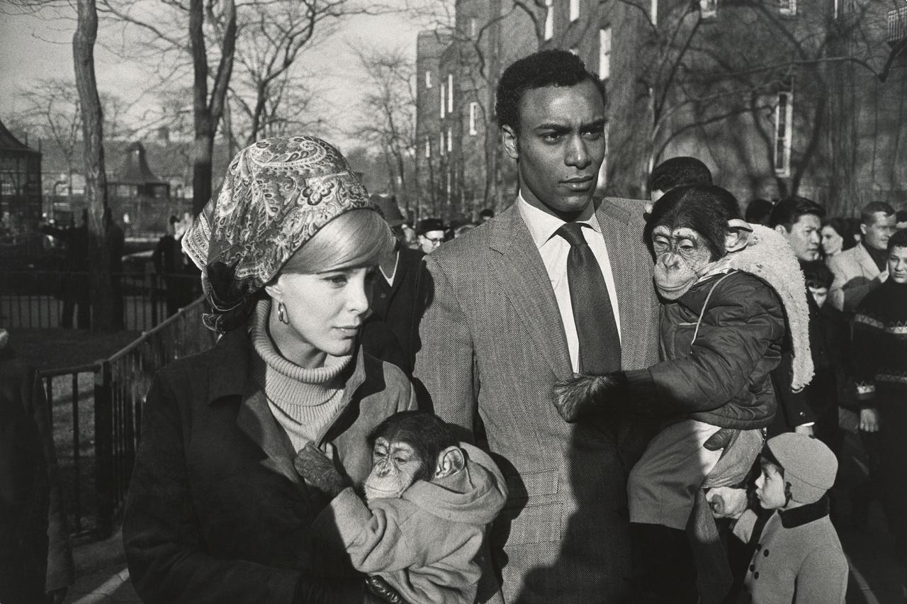 Central Parki Állatkert, New York                         (1967)