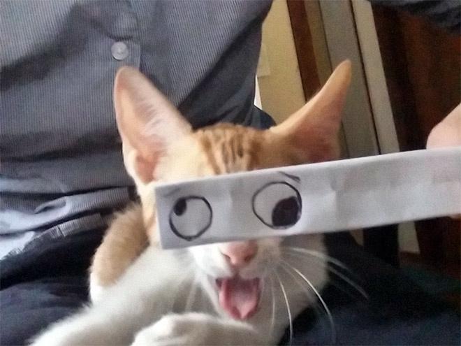 Aztán a cetlit a macska elé tartják.