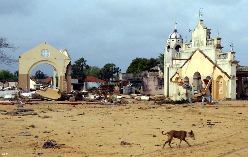 Kóbor kutya Srí Lankán, Mullaitivu városnál. A fővárostól 31 km-re fekvő partvidékre lecsaptak az óriáshullámok. A világ legtöbb országában visszafogottabban ünnepelték meg a szilvesztert szolidarítva az áldozatok hozzátartozóival és az otthonukat elvesztőkkel. Több ország hatóságai úgy döntöttek, hogy a szilveszteri rendezvényeiket alacsonyabb költségvetéssel bonyolítják le, és az ünneplőket arra szólították fel, hogy a mulatságra szánt pénzekből különítsenek el egy összeget a károsultak megsegítésére.