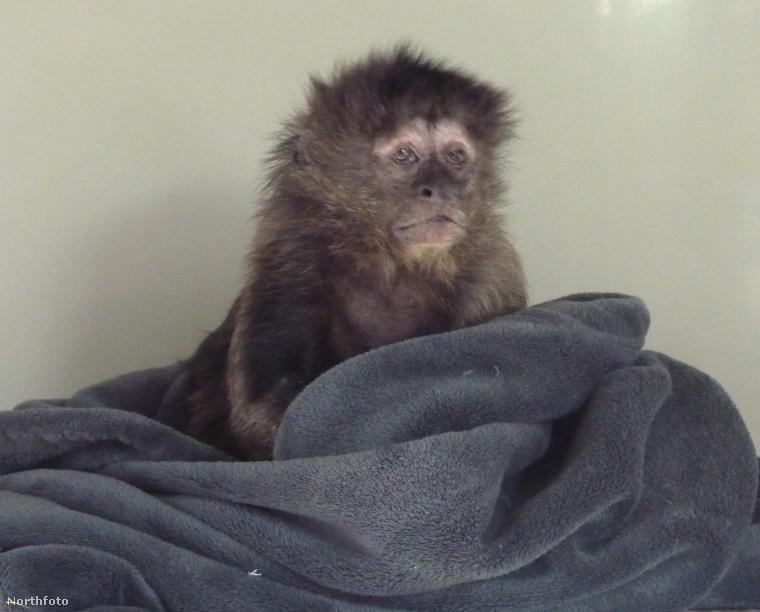tk3s medavia rescued monkey 1