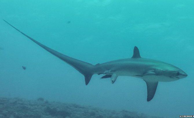 sharkgivesbirth
