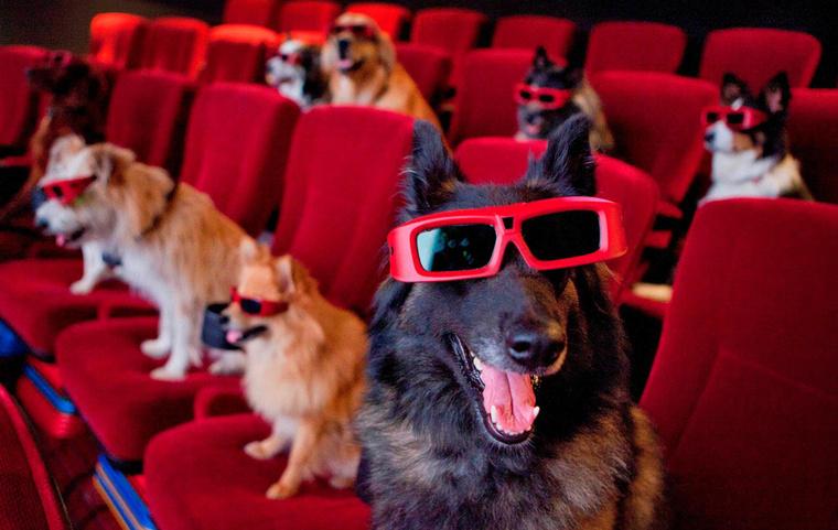pet-theater