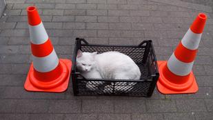 Macskák uralják a fővárosi benzinkutakat