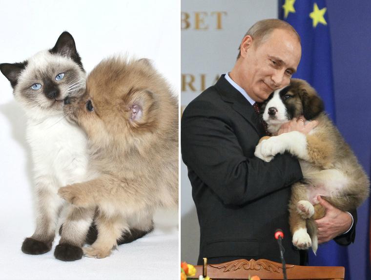 De ami a legfontosabb, hogy a sziámi, és az orosz elnök is szereti a kutyákat