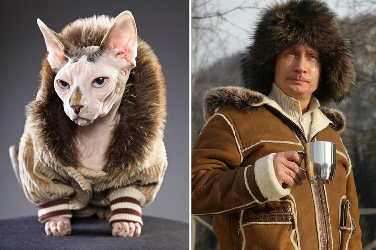 A majdnem teljesen szőrtelen szfinx macska egyébként Kanadából származik.