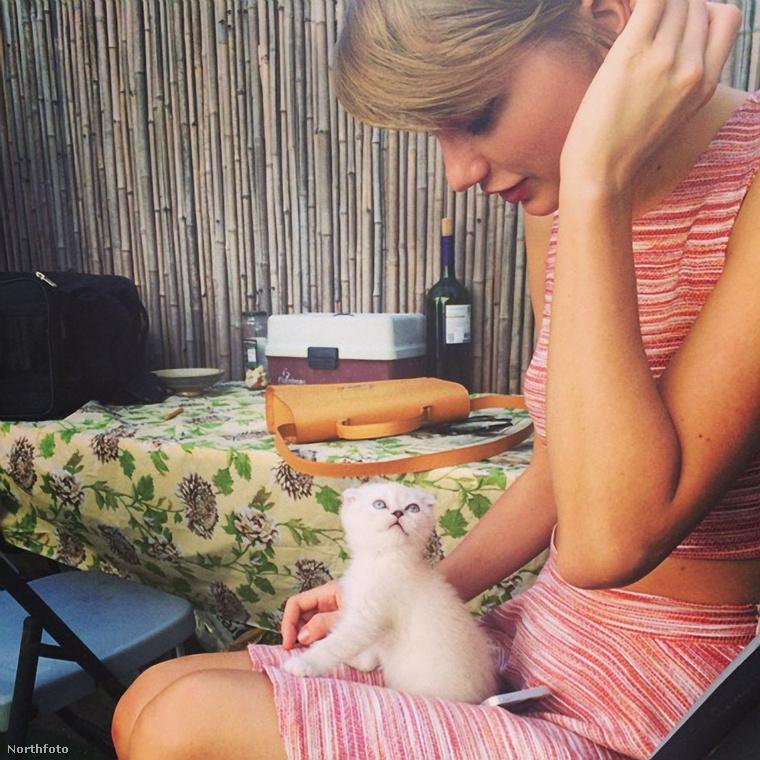 Taylor Swift cicája, Olivia Benson is ilyen fajta, és az énekesnő rengeteg képet posztol róla instagramjára