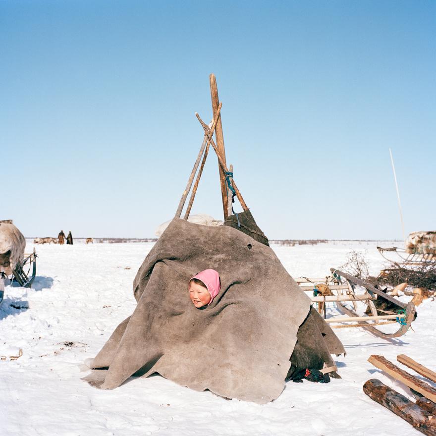 Olga játszik a hagyományos nyenyec sátor gyerekverziójában a Jamal-félszigeten. A tradicionális nyenyec életmódot – a rénszarvastenyésztést, halászatot és vadászatot – súlyosan fenyegeti a nyenyec területek iparosítása és az ezzel járó környezetkárosítás. A gáz- és olajipar fejlődésével egyre csökkenek a rénszarvascsordák legelőterületei. Az éghajlatváltozás szintén megnehezíti a nyenyec pásztorok életét, mivel vannak területek, amelyet csak télen, a fagyok idején érnek el. Az utóbbi években azonban a tél sokkal rövidebb, ezért a nomád nyenyecek hosszú hónapokra ott ragadnak az érintetlen területeken a hóra várva, a falvaikat pedig hamarabb ott kell hagyniuk,  még mielőtt a hó elolvad.