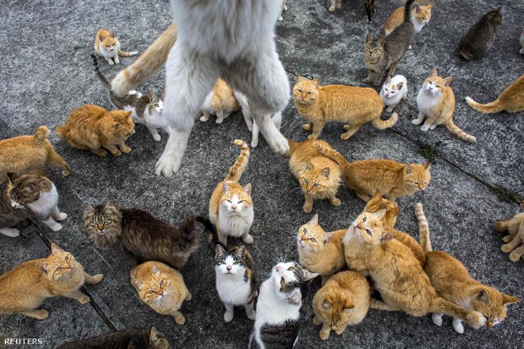 Rendkívül fotogén állatok