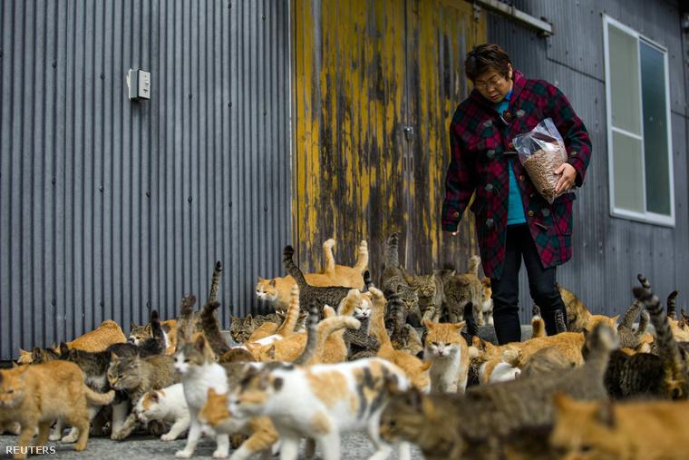 Atsuko Ogata felügyeli hivatalból a macskákat