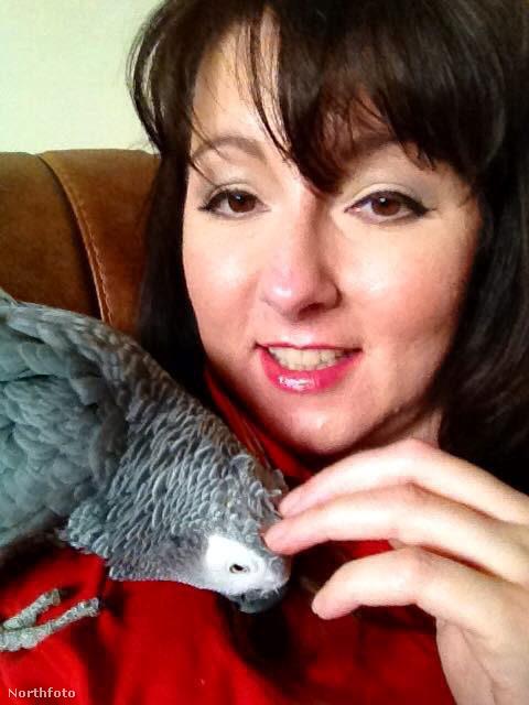 tk3s masons parrot kidnap 02