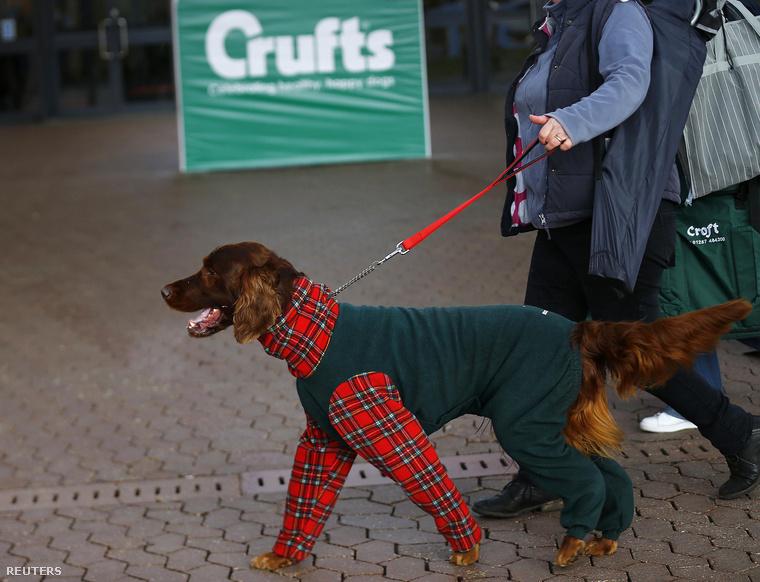 Még épp csak elkezdődött Birminghamben a világ legnagyobb kutyakiállítása, a Crufts Dog Show, de a divathetekhez hasonlóan az igazi műsor már a bejáratnál elkezdődött