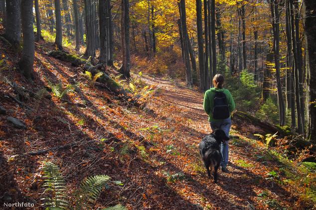 Egyedül (vagy a kutyával) is útnak indulhatunk, de ilyenkor különösen alaposan készüljünk fel az útvonalból
