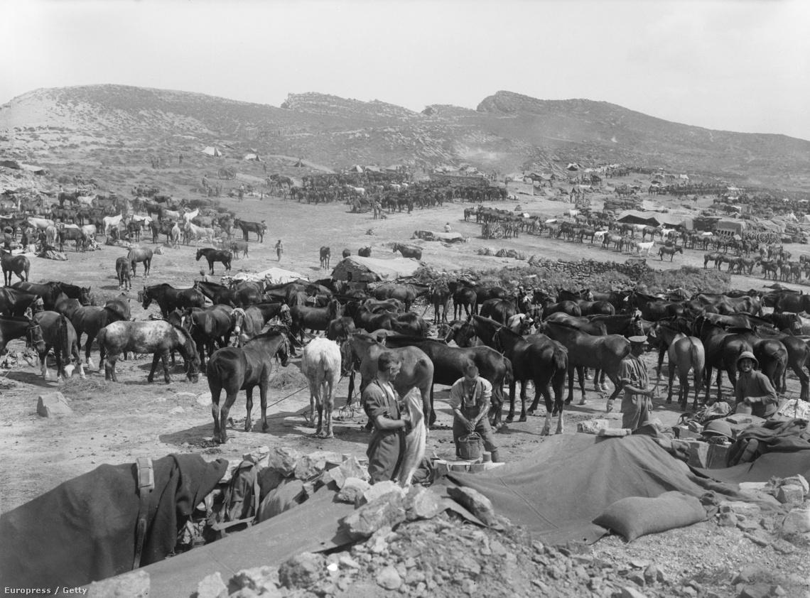 Tábort vernek az angol csapatok Gallipoli egyik sík vidékén.