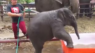 Nézze meg, mennyire cukin fürdik egy elefántbébi!