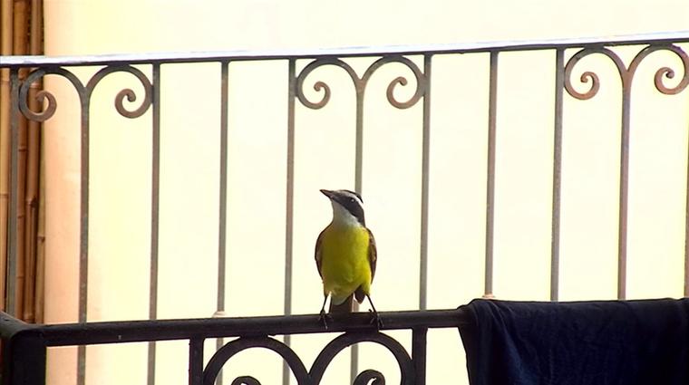 Érkezett egy madár is, de a következő képtől hanyagoljuk ezt az ornitológiai vonalat.