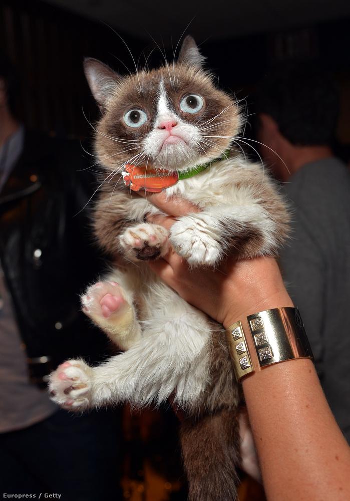 Ja, és azért azt mindenképpen meg kell még említeni, hogy ott volt Grumpy Cat is